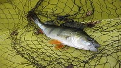 Ministro Giuffra destaca el crecimiento del sector pesquero