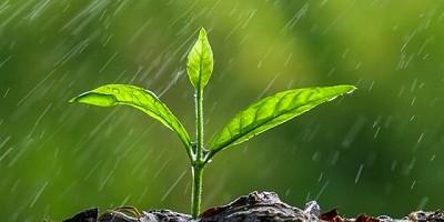 Los excesos de lluvias complican las tareas - GEA - BCR