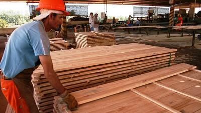 El sector maderero en crisis por ca�da de ventas, aumento de costos y retroceso de la actividad