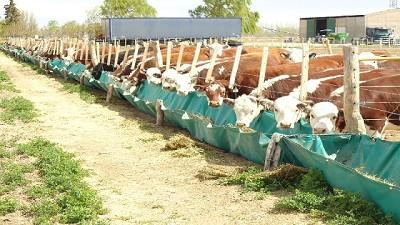 Incendios: c�mo planificar la alimentaci�n del ganado