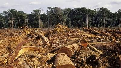 Las tierras devueltas en Salta Forestal se usar�n en proyectos ganaderos