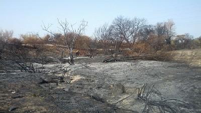Naci�n homologar� la Emergencia por incendios en R�o Negro
