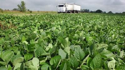 Micronutrientes: l�mite invisible de la soja