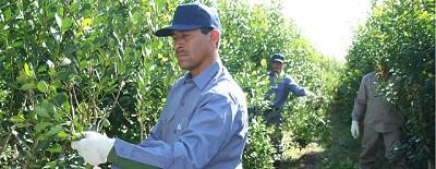 Los precios al productor dispararon la crisis en el sector de la yerba