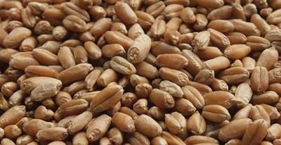 Sistiva, innovaci�n en fungicidas para el tratamiento de semillas