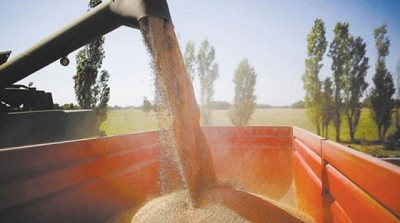 Empresa argentina sería una de las ganadoras de la nueva ley de semillas